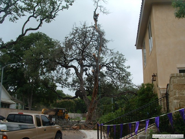 San Antonio Tree Removal Stump Removal Services San Autos Post